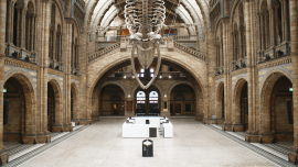 Natural History Museum, contactless terminal